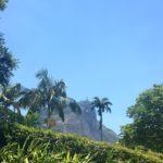 Palmedrmmer p regnvrsdager tbt